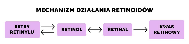 Mechanizm działania retinoidów